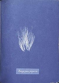 Anna Atkins Bangia fusco-purpurea.jpg
