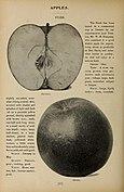 Annual report of the Fruit Growers' Association of Ontario, 1902 (1903) (14769885245).jpg