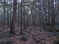 Aokigahara Forest (10863125735).jpg