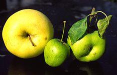Apfelfamilie.JPG