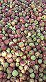 Apples of tribjee arwani, Bijbehara 2.jpg