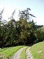 Approaching Coed Tir Llanerch - geograph.org.uk - 248764.jpg