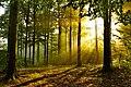 Arnsberger Wald Sonnenaufgang.jpg