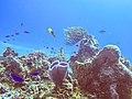 Arrecifes de Cozumel National Park.jpg