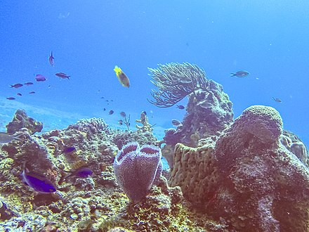 Coral reef and marine life in Arrecifes de Cozumel National Park Arrecifes de Cozumel National Park.jpg