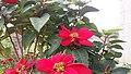 As cores de Santa Catarina são mais Flores dessas assim.jpg
