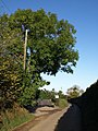 Ash Tree, Beacon View - geograph.org.uk - 1548517.jpg