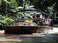 Australia Cairns Amphibi.jpg