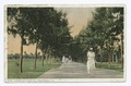 Australian Pines Avenue, Palm Beach, Fla (NYPL b12647398-74043).tiff