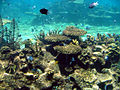 Australian coral sealife.jpg