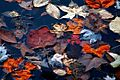 Autmun-leaves-water ForestWander.jpg