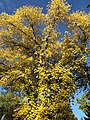 Autumn Leaves 2014 (15987789984).jpg