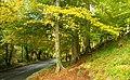 Autumn at Minnowburn 2008 (3) - geograph.org.uk - 1023335.jpg