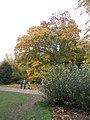 Autumn at RHS Wisley (1) - geograph.org.uk - 1561918.jpg