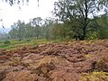Autumn colours Bohespic. - geograph.org.uk - 263299.jpg