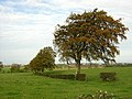 Autumnal Tree Beside Langlands Road - geograph.org.uk - 269982.jpg