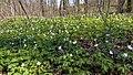 """Błażowa - wiosna """"Pod Dębem"""" - panoramio.jpg"""