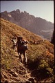 Back - Packing Expedition Of Explorer Post 397 Of Los Angeles Area - NARA - 543387.tif