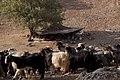 Bakhtiari nomad camp.jpg