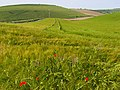 Barley, Chaldon Herring - geograph.org.uk - 848156.jpg