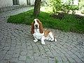Basset Hound (Havlíčkův Brod) 01.jpg
