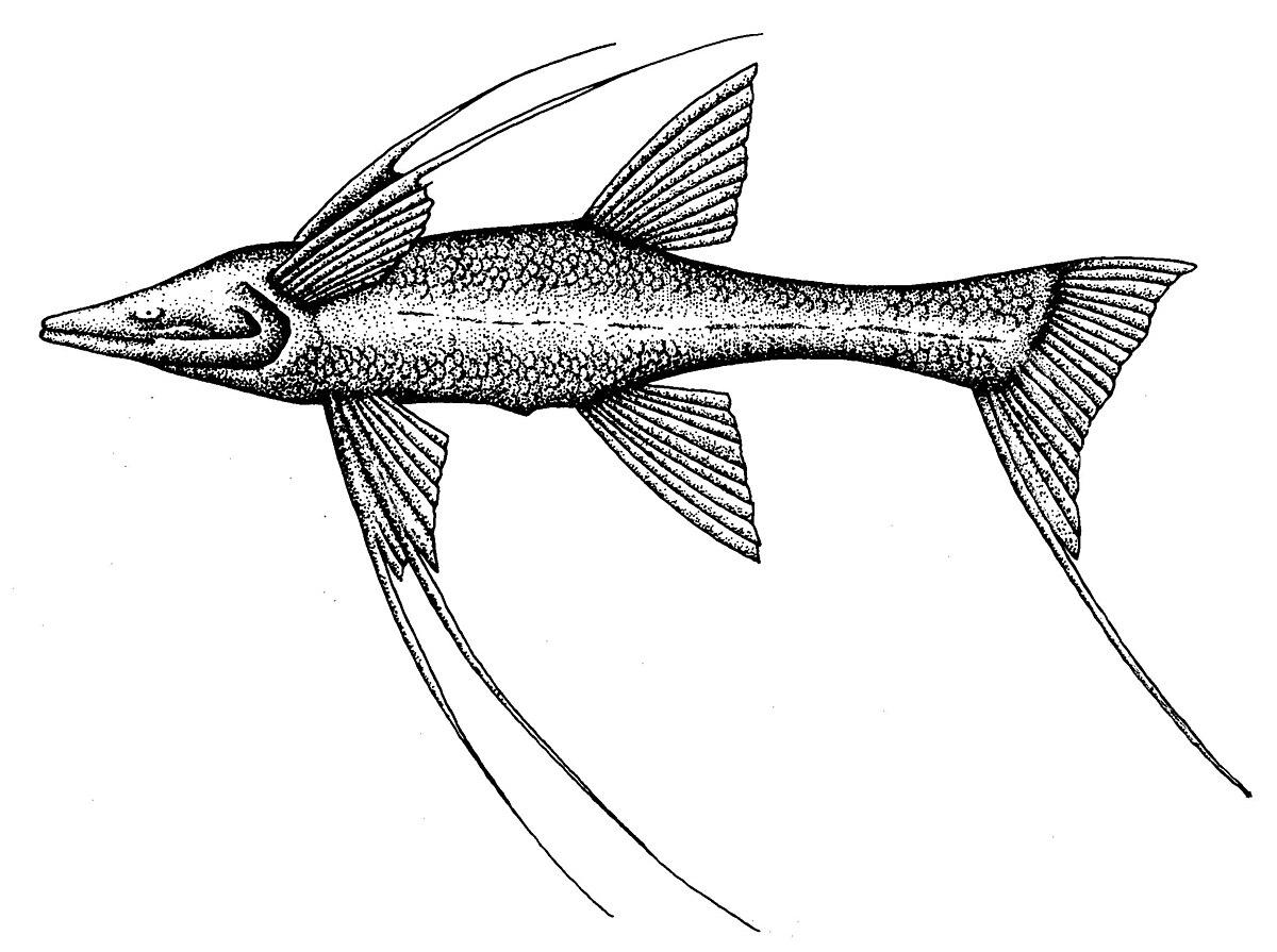 poisson tripode  u2014 wiktionnaire