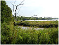 Baytown-Goose-Creek-stream-8-24-2008.jpg
