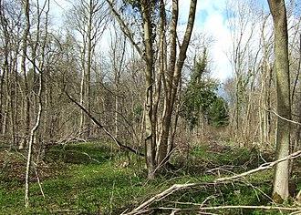 Bedford Purlieus National Nature Reserve - An area of coppice regrowth in Cocker Wood, the easternmost of the compartments