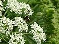 Bee - 42778665354.jpg