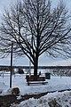 Bench and tree IMG 1645 1 (8512403738).jpg