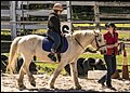 Benjamin at Riding School 4 (29194052491).jpg