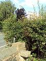 Benkid77 Brimstage-Parkgate footpath 46 240709.JPG