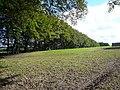 Bent Lane - Beech Trees opposite Burley Fields Farm - geograph.org.uk - 567175.jpg
