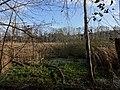 Berlin-Westend Fließwiese Ruhleben Blick nach Osten.JPG