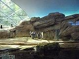 Berlin-zoo-penguinarium.jpg