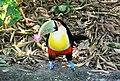 Beto Carrero Zoo - panoramio (30).jpg