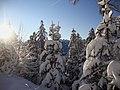 Bianco gennaio - panoramio.jpg