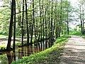 Bieriņi, Zemgales priekšpilsēta, Rīga, Latvia - panoramio (7).jpg