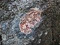 Big garnet amphibolite (Precambrian; Warrensburg, Adirondack Mountains, New York State, USA) 52.jpg