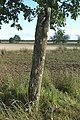 Bildsten Bro Eriks 1 (Suderbys 1) - KMB - 16000300015459.jpg