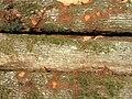 Billes de bois sur le bord d'une route - 004.JPG