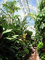 Biltmore Estate - greenhouse 2.JPG