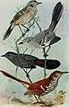 Bird-lore (1916) (14568938177).jpg