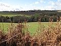 Black Brook Valley - geograph.org.uk - 1190141.jpg