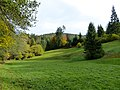 Black Forest- Meadow (10561897306).jpg