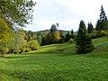 Black Forest- Meadow (10561897306).jpg