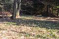 Bledule jarní v PR Králova zahrada 18.jpg