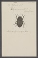 Blenosia - Print - Iconographia Zoologica - Special Collections University of Amsterdam - UBAINV0274 027 30 0004.tif