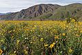 Blooming desert.jpg