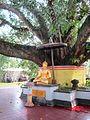 Bodhi Tree in Pagoda Avalokitesvara.jpg